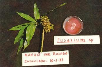 Escoba de bruja en mango slide 1