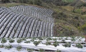 Estimulante del crecimiento y fungicida biológico TH-35