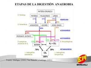 etapas-de-la-digestion-anaerobia